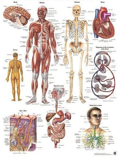 Klachten die met orthomoleculaire/natuurtherapie behandeld kunnen worden.